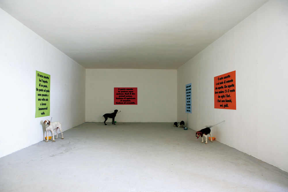 Performance - Dogs to difese the concepts - Alessandro Jasci